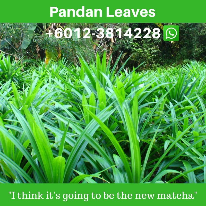 Pandan leaf important to Asians as vanilla is to westerners